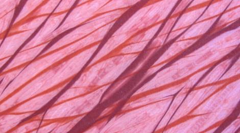 Shibori Dyeing: All Tied Up, Again